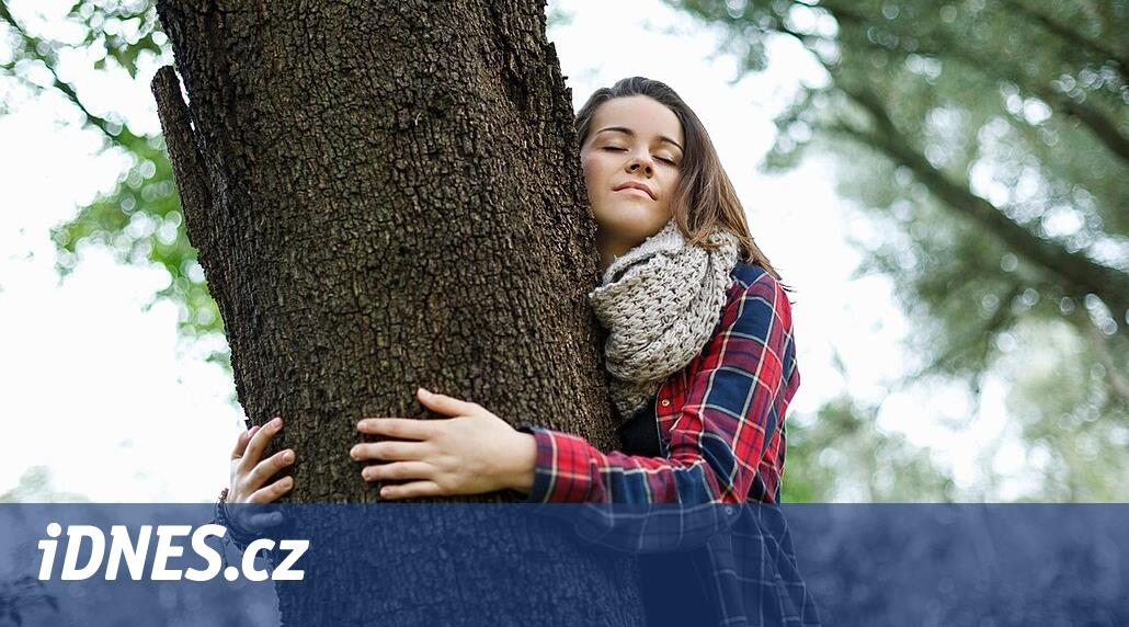 Přitulte se ke stromu. Zklidníte se a ucítíte, jak proudí život