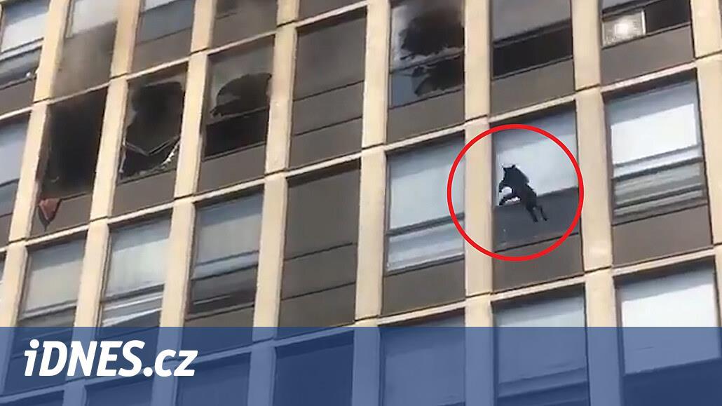 VIDEO: Ani jeden život ztracený. Kočka skočila z pátého patra hořícího domu