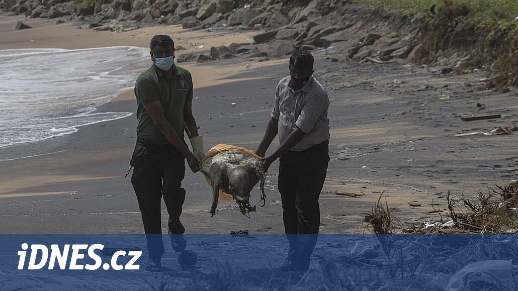 Moře u Srí Lanky vyplavilo po květnové nehodě stovky mrtvých želv