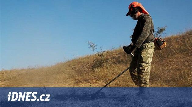 Mýcení hektarů borůvčí v jesenické rezervaci má zpoždění, firma nestíhá