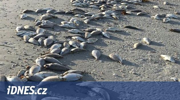 Pláže Floridy ochromil červený příliv. Hynou ryby, ptáci i želvy