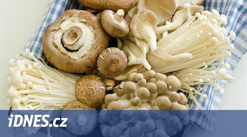 Mají houby opravdu léčivé účinky? Sedm otázek pro odborníky na výživu.