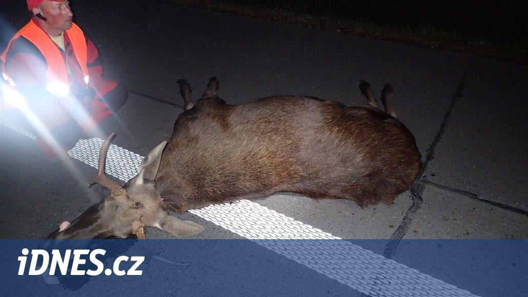 Dodávka srazila na silnici v Ostravě skoro čtyřmetrákového losa