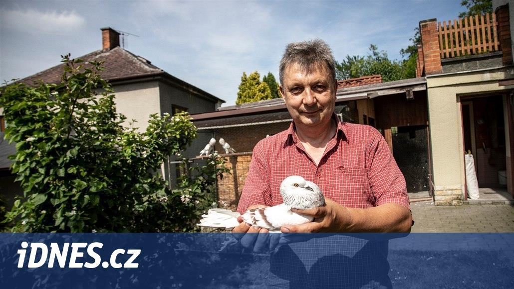 Číňané byli ochotní za poštovního holuba zaplatit i milion, říká chovatel