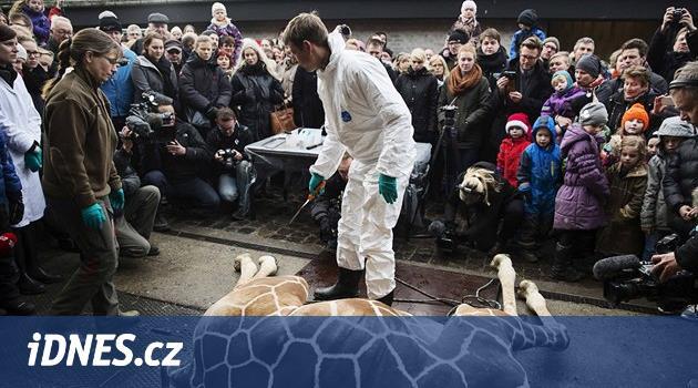 Zoo v Kodani utratila naprosto zdravé žirafí mládě. Bylo přebytečné