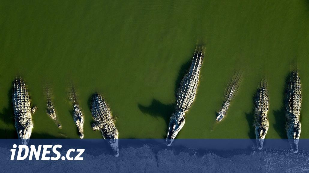 Co se stovkami krokodýlů? Západní břeh Jordánu děsí zkrachovalá atrakce