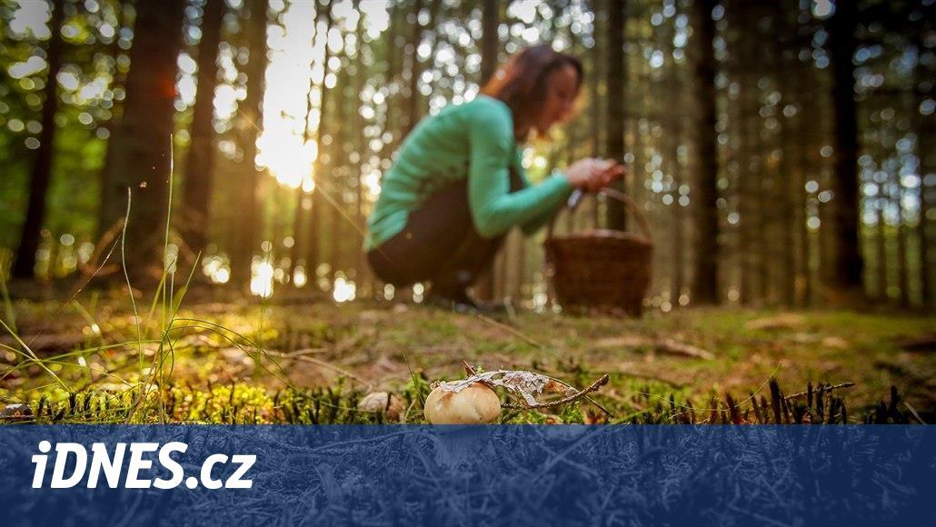 Rostou! Jihočeští houbaři nosí domů plné košíky