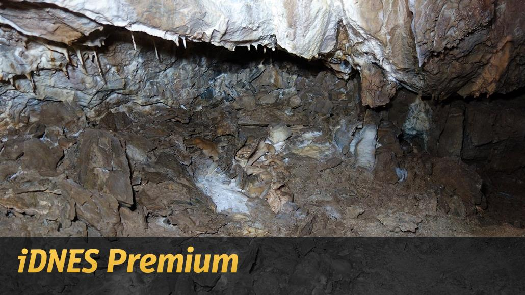 V jeskyni našli unikátní kostru medvíděte. Může být stará přes tisíc let