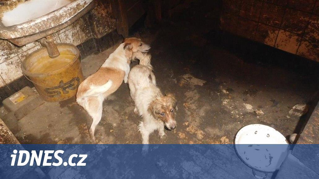 Psi přežívali v bednách s potkaním trusem, veterináři smečku zabavili
