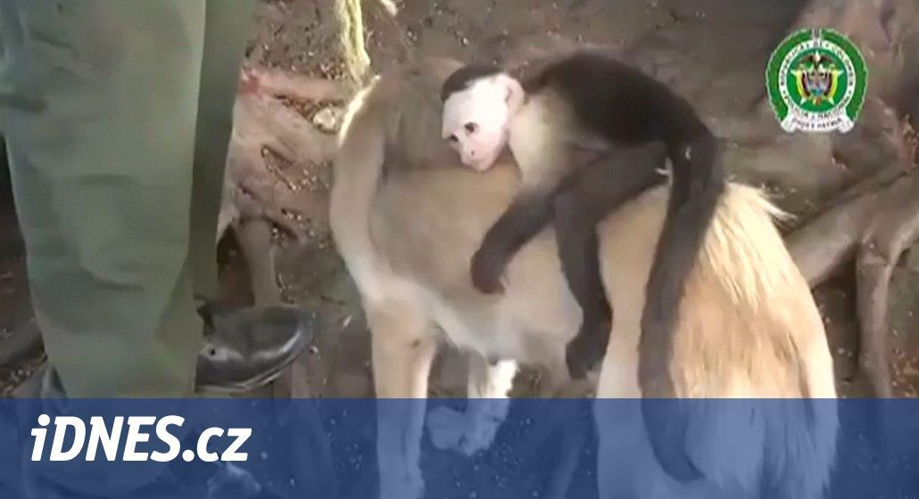 Fena přišla o štěňata, zato odkojila opičku. Ta se jí teď nechce pustit
