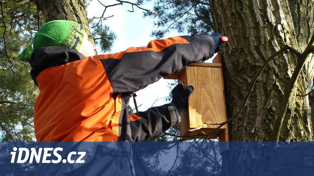 Nejvyšší čas vyčistit a opravit ptačí budky. Případně rozvěsit nové