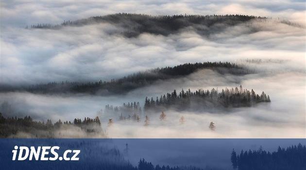 Lesy ČR se odvolaly proti výjimce na kácení v Boubínském pralese