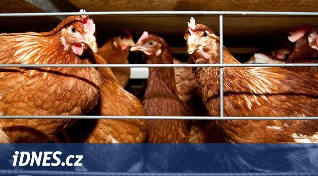 Tesco přestane ve Střední Evropě prodávat vejce z klecových chovů