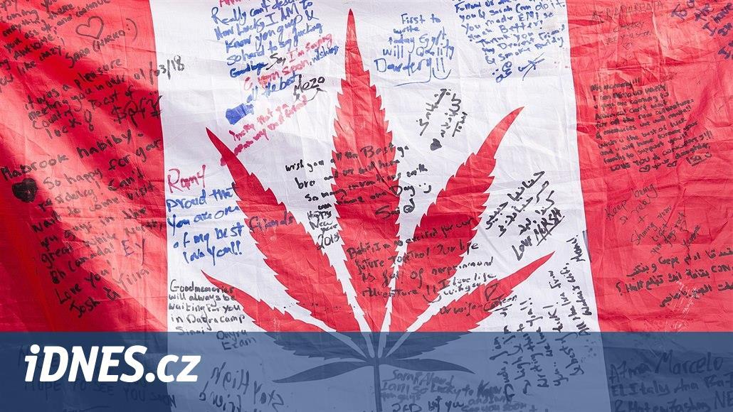 Jak ovlivní shovívavou NHL legalizace marihuany? Mně pomohla, říká bitkař
