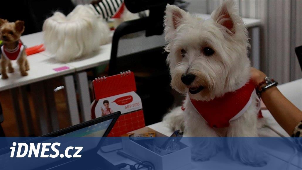 Se psem do práce? Řešení přínosné pro všechny, myslí si Thajci