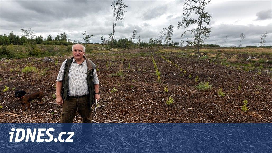 Na Libavé vysázeli 50 milionů nových stromů. Smrky přišly o nadvládu