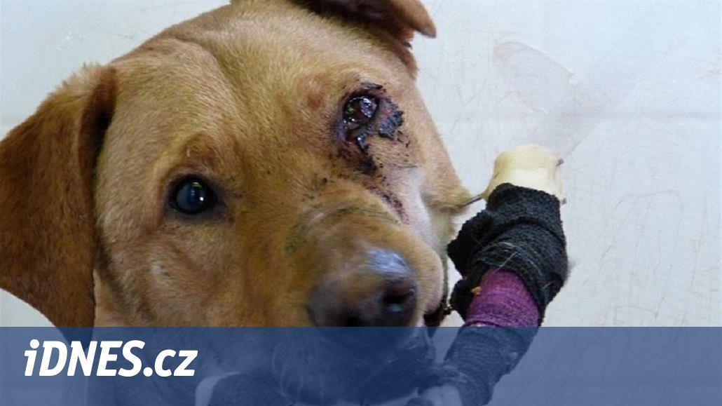Děčínská policie obvinila muže z týrání psa, může dostat až tři roky