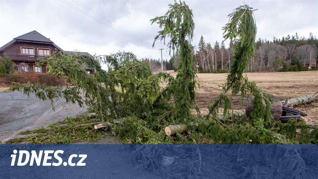 Co nahlodal kůrovec, dokončila Sabine, říkají lesníci na jihozápadě Čech