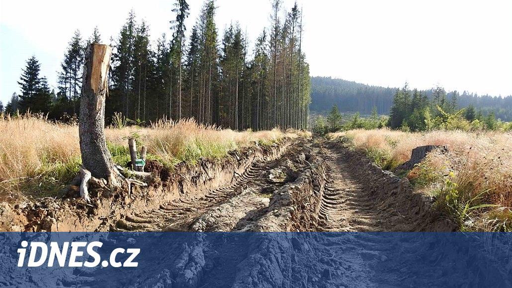Těžba dřeva podle aktivistů ničí Jeseníky, mluví o hře bez pravidel
