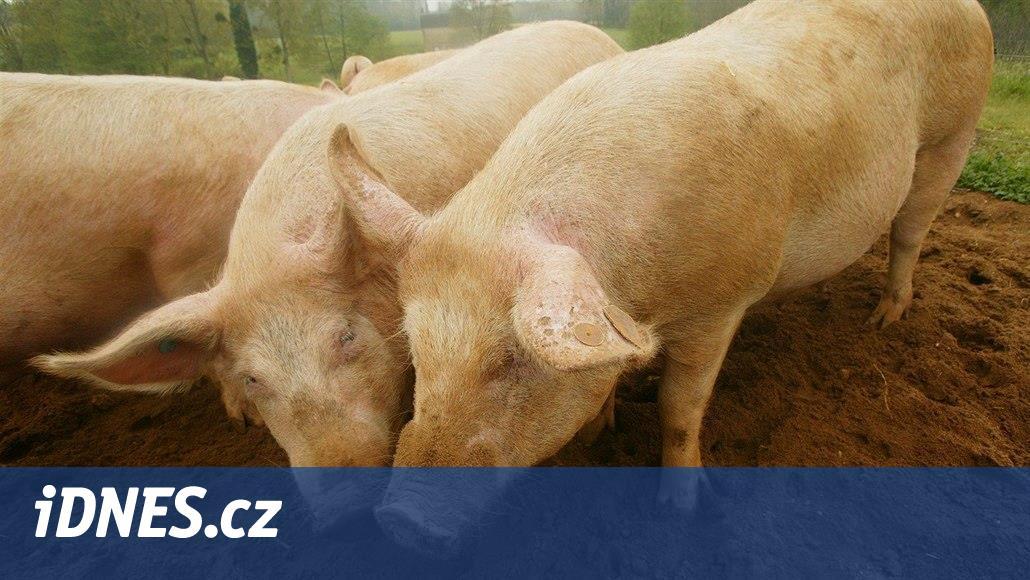 Lidé v Sedlici bojují peticí proti spalovně zvířat, bojí se zápachu